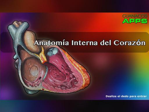 Anatomía Interna del Corazón