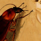 cucaracha icon