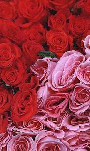 粉紅色的花朵壁紙