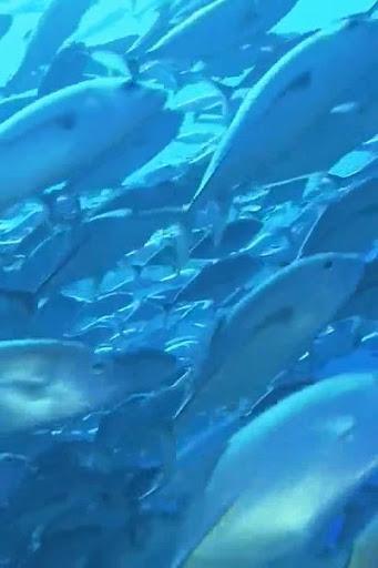 【免費個人化App】Ocean fish Live Wallpaper-APP點子