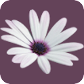 Blooming Garden Live Wallpaper icon
