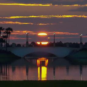 Bridge Lights by Rich Eginton - Landscapes Sunsets & Sunrises ( lights, reflection, arch, sunrise, bridge,  )