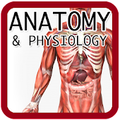 Anatomy and Physiology‏