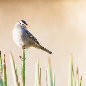 bird (1 of 1)-29.jpg