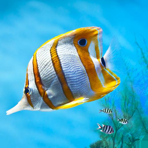 Aquarium Pocket Guide LOGO-APP點子