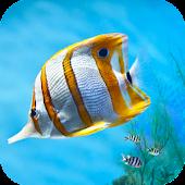 Aquarium Pocket Guide