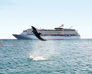 A dolphin leaps through the air in Curacao during a port visit by Adventure of the Seas.