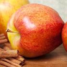Apple Matching icon