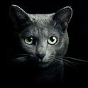 Найди кота icon