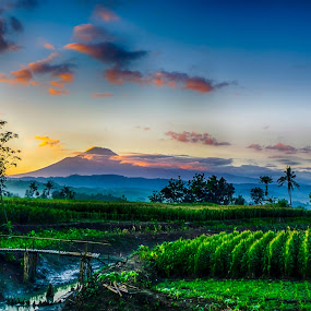 red slamet mt by Dugalan Poto - Landscapes Mountains & Hills ( field, central java, mountain, red, dugalanisme, indonesia, dugalan, sunrise, morning, mt slamet, tegal )