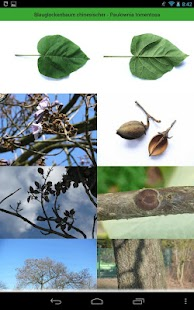 Tree Identification - screenshot thumbnail
