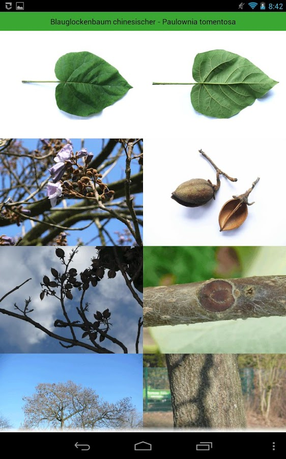Tree Identification - screenshot