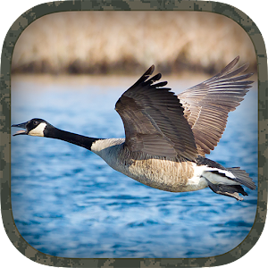 canada goose sounds download
