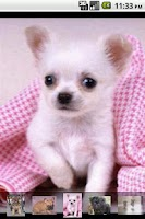 Screenshot of Puppy Love