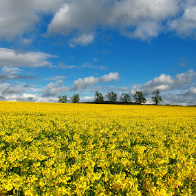 Spring's Smile by Pipia Kanjeva - Landscapes Prairies, Meadows & Fields ( #spring #field #blossom #nature #yellow,  )