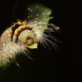 Rest Time by Rizal Meilano - Animals Insects & Spiders ( macro photography, insect )