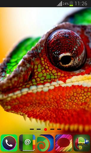 Chameleon Go Theme
