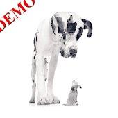 Hundar i Världen: Demo