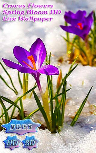 3D Crocus Flowers on Snow Free