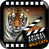 Best Wild Cats Sounds