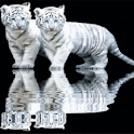 Tiger Cubs Live Wallpaper