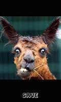Screenshot of Funny Animal Camera
