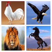 Animal Sound