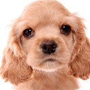 Kitten & Puppy Live Wallpaper mobile app icon