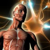 ATLAS: Human Body Anatomy