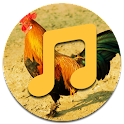 Rooster Sounds icon