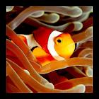 Guía de peces de acuarios icon