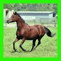 الخيول : الألغاز للأطفال والأس icon