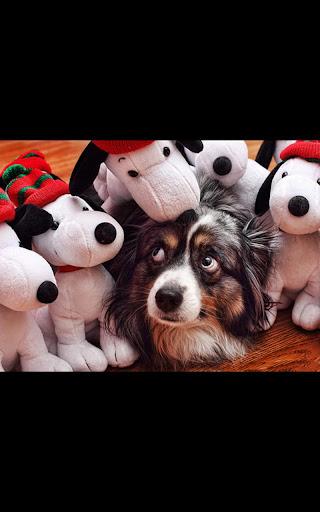 玩個人化App Funny Dogs Live Wallpaper免費 APP試玩