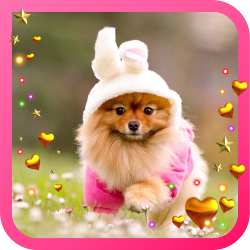 Spring Pet Love live wallpaper LOGO-APP點子