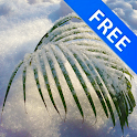3D Tender Snowy Palm Free