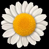 Step Flowers