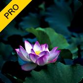 Meditative Harmony Pack (PRO)
