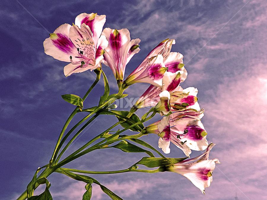 pretty flowers by LADOCKi Elvira - Flowers Flower Gardens ( nature, color, 2014, plants, flowers, garden )