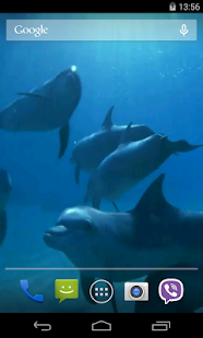 Dolphins Video Live Wallpaper - náhled