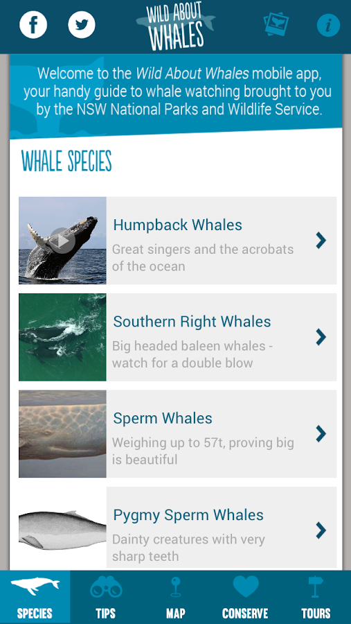 Whales NSW- screenshot
