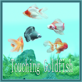 Touching Goldfish!!