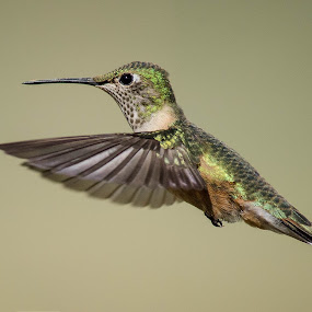 by Rick W - Animals Birds ( nature, green )