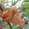 September Thorn