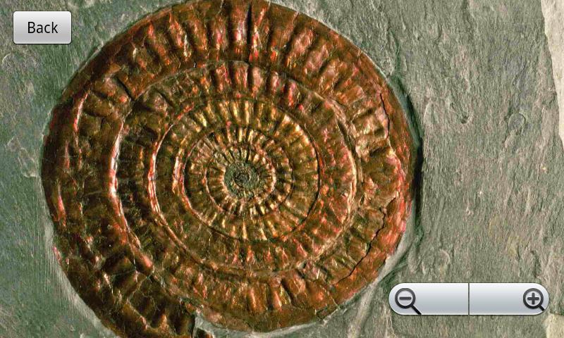 Fossils- screenshot