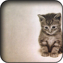 Kitten 3d Wallpapers icon