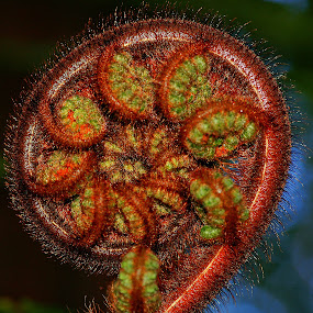 Westland Fern by Tim Bennett - Nature Up Close Leaves & Grasses
