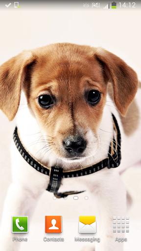 可愛的狗 動態壁紙