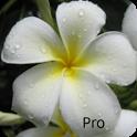 Kauai Flowers Pro icon