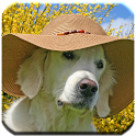 Golden Retrievers - Wallpapers icon