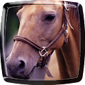 Horse Live Wallpaper icon